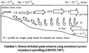 Sistem sirkulasi pada daerah estuari